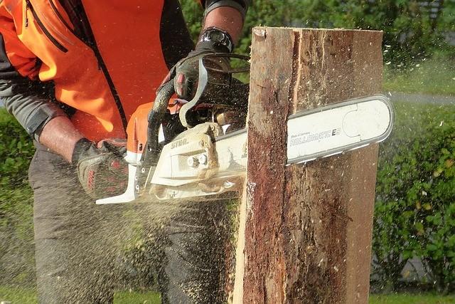 חיתוך גזע עץ