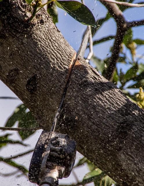 גיזום ענף